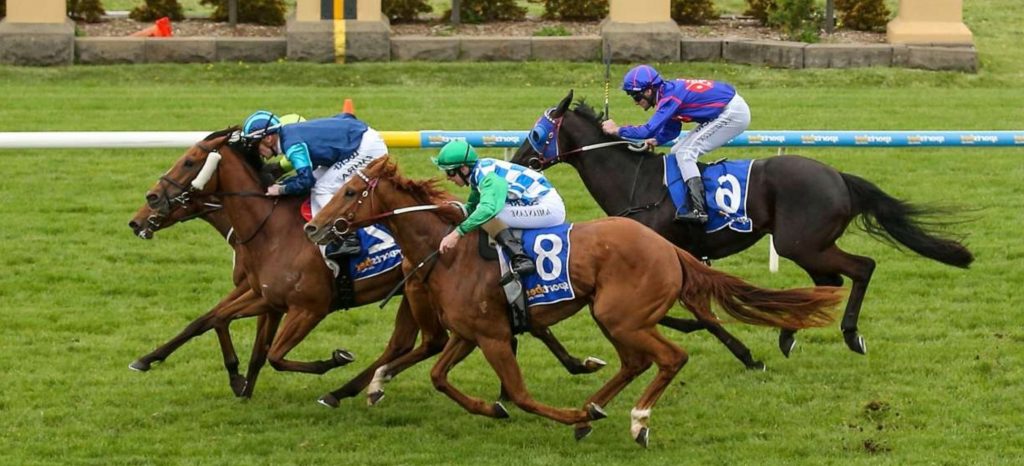 image 21 1024x466 - What not to do when horse betting online