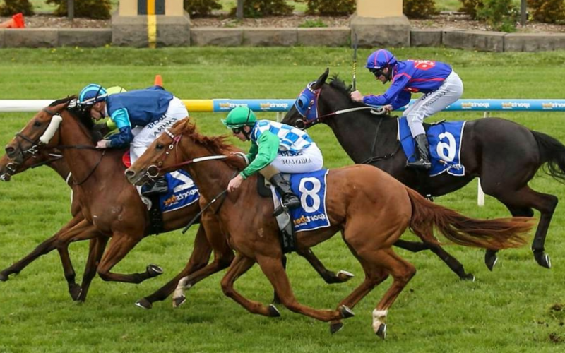 image 21 800x500 - What not to do when horse betting online